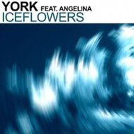 York ft. Angelina