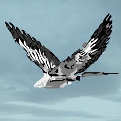 GreyBird