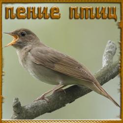 Пение птиц