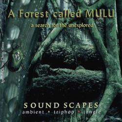 A Forest Called Mulu