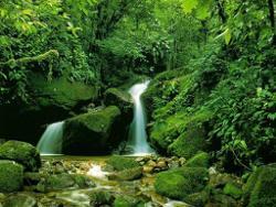 Nature Sounds