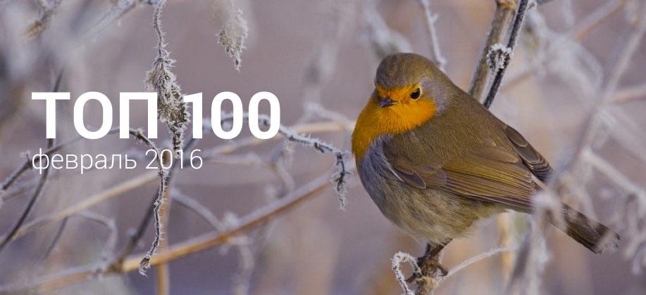 Топ 100 Zaycev.net февраль 2016