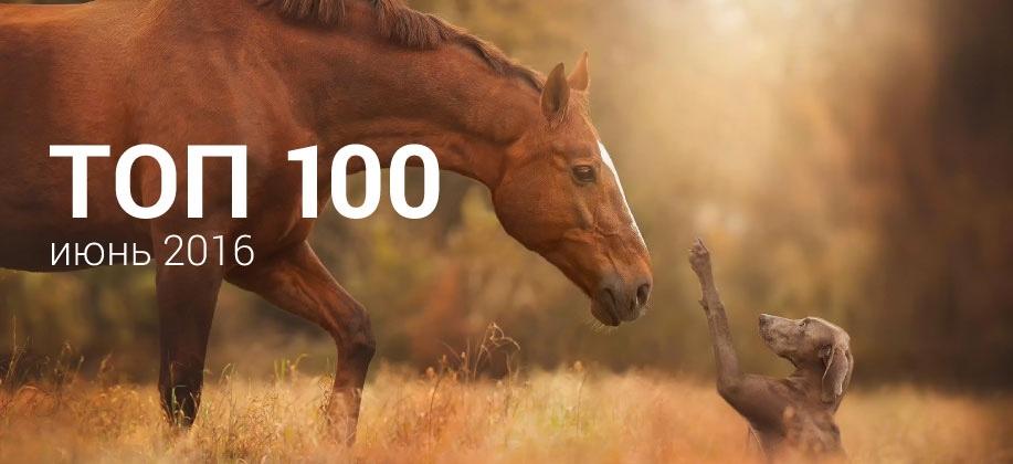 Топ 100 Zaycev.net июнь 2016