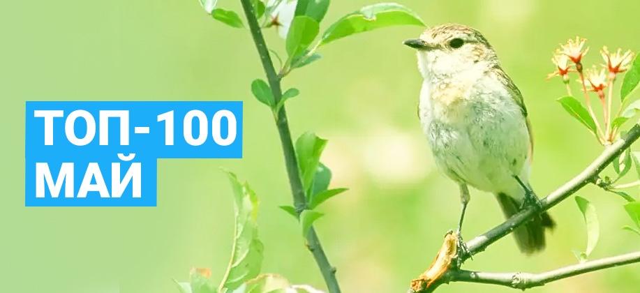 ТОП 100 Zaycev.net май 2017